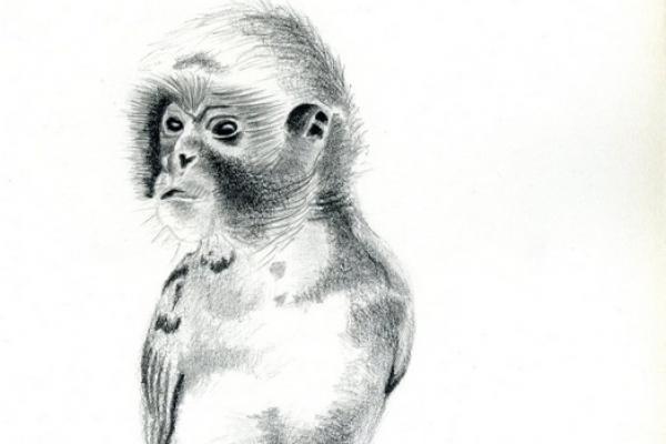 alle-apen-op-een-stokjeD4B16CD9-DE8C-D795-6C9B-66FA4C6E1F0B.jpg
